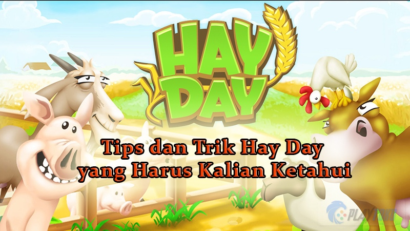 tips main hay day